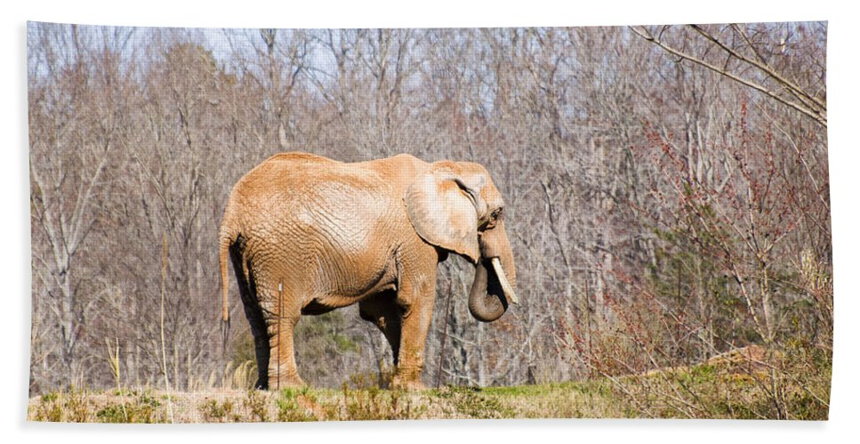 African Elephant Hand Towel featuring the digital art African Elephant On A Hill by Chris Flees