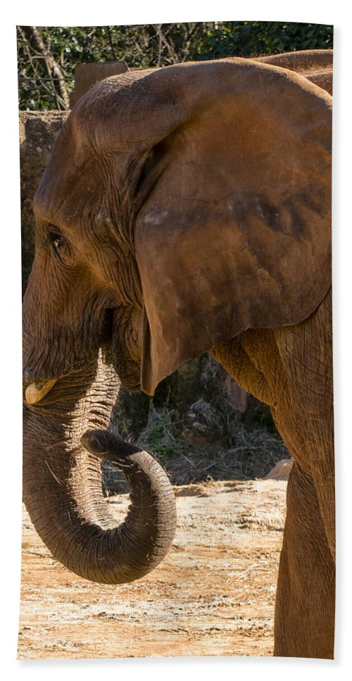 African Elephant Hand Towel featuring the digital art African Elephant Profile by Chris Flees