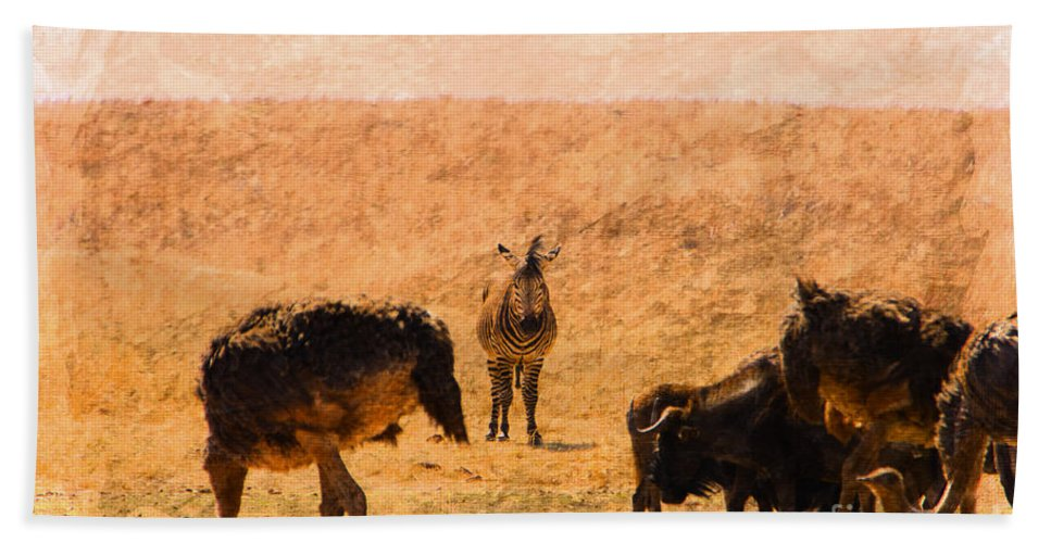 Black Wildebeest Bath Sheet featuring the photograph African Gathering by Douglas Barnard