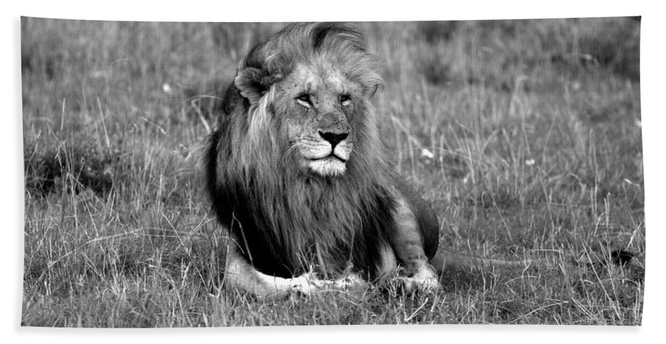 Lion Hand Towel featuring the photograph African Lion by Aidan Moran
