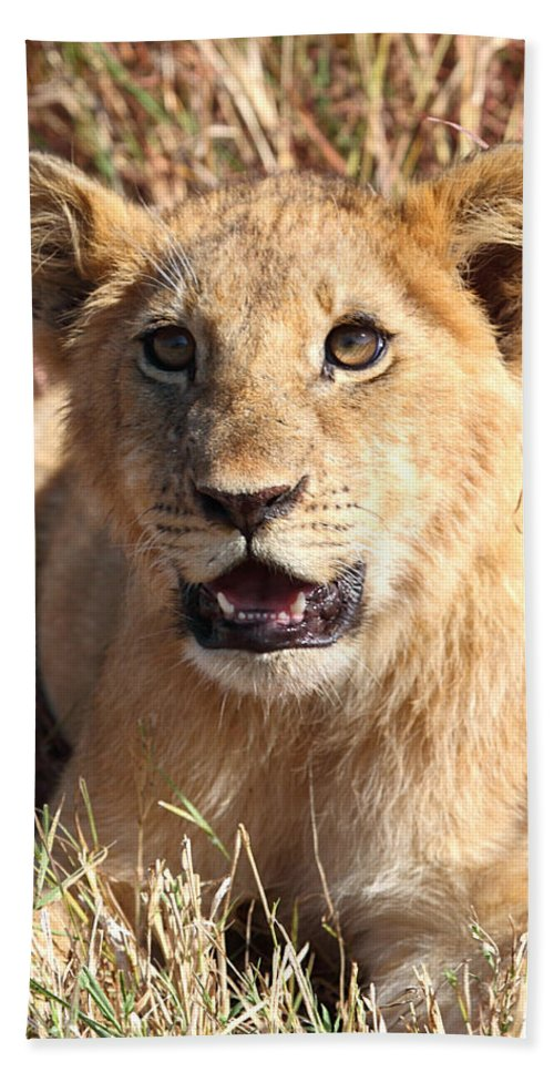 Lion Bath Sheet featuring the photograph African Lion Cub Resting by Carole-Anne Fooks