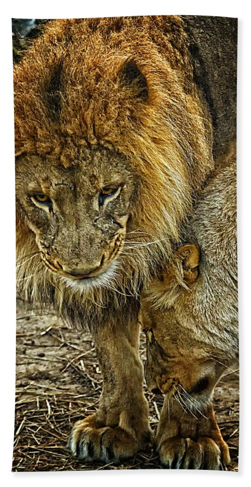 Lions Hand Towel featuring the photograph African Lions 6 by Linda Tiepelman