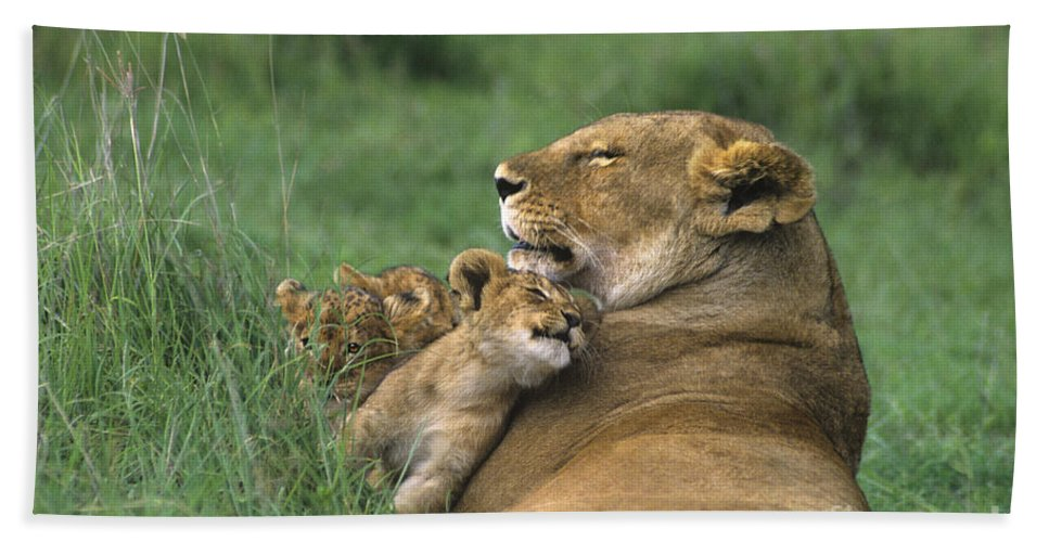 Africa Hand Towel featuring the photograph African Lions Mother And Cubs Tanzania by Dave Welling