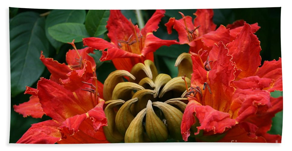 Aloha Bath Sheet featuring the photograph African Tulip Tree by Sharon Mau
