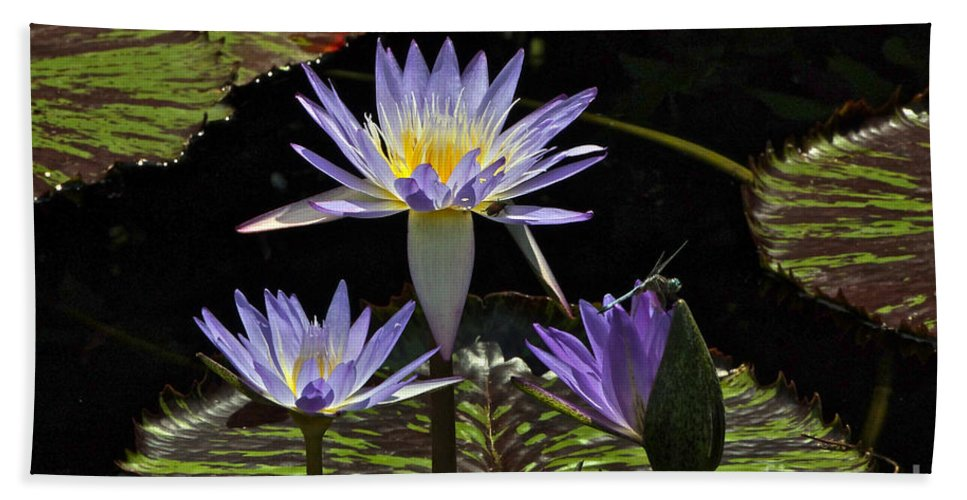 Nymphaea Caerulea Bath Towel featuring the photograph African Waterlily Dazzle -- Plus Dragonfly by Byron Varvarigos