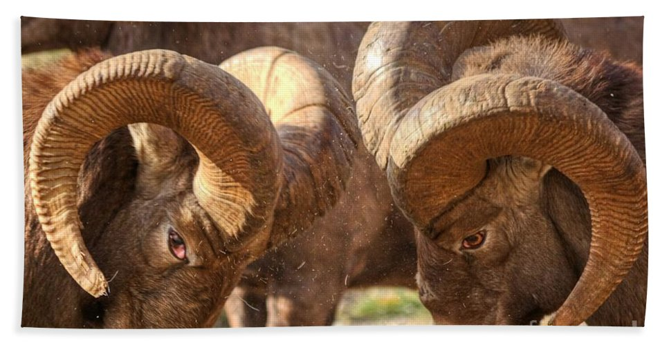 Bighorn Ram Bath Sheet featuring the photograph After Impact by James Anderson