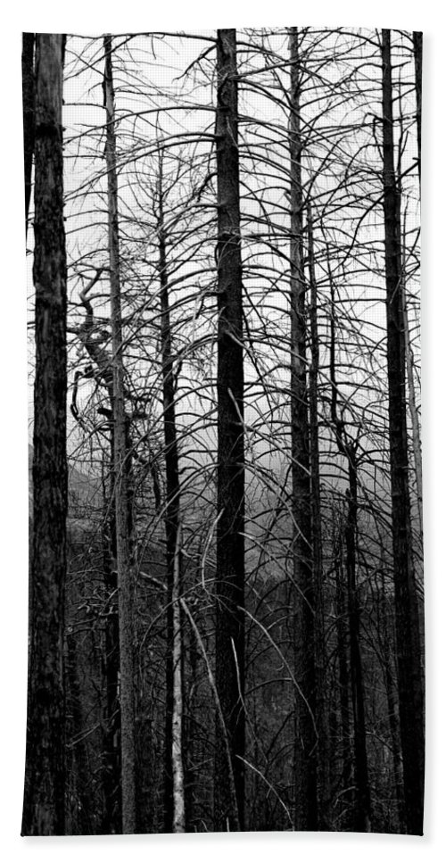 Trees Bath Sheet featuring the photograph After the Fire by Joe Kozlowski