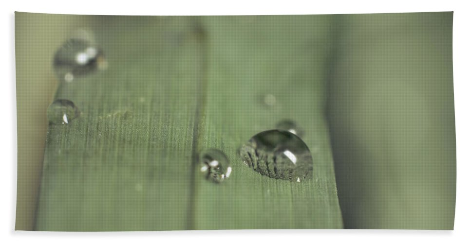 Morning Bath Sheet featuring the photograph After The Rain by Lucid Mood
