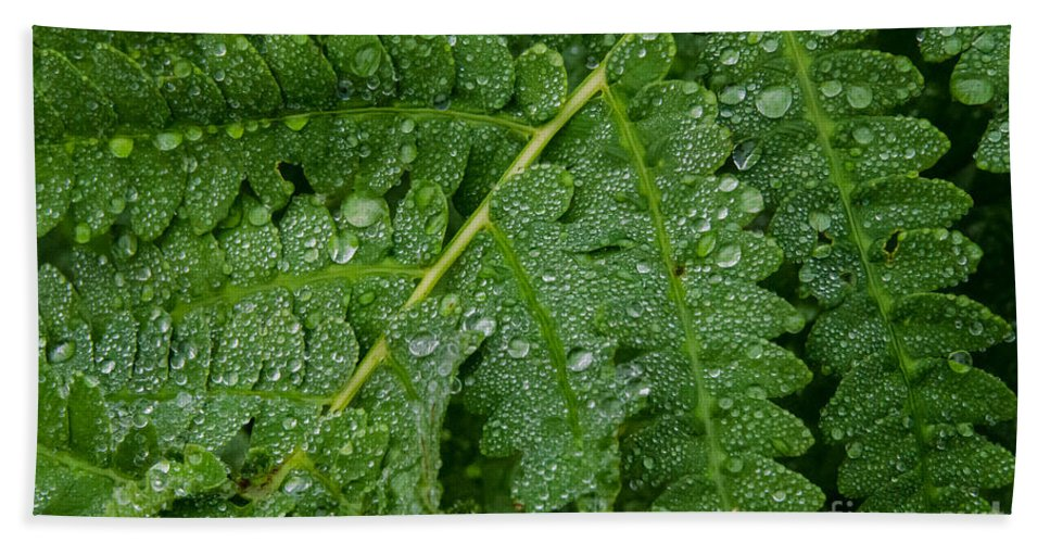 Fern Hand Towel featuring the photograph After The Rain by Pat Lucas