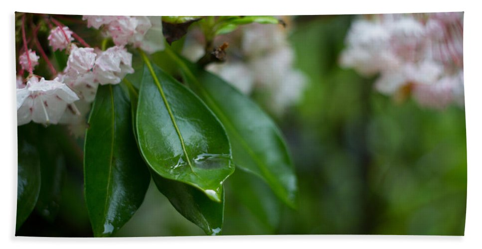 Rhododendron Bath Sheet featuring the photograph After The Storm by Patrice Zinck