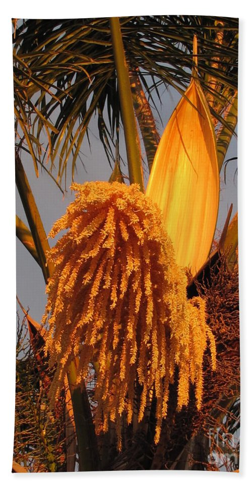 Palm Trees Hand Towel featuring the photograph Afternoon Glow by Sheryl Young