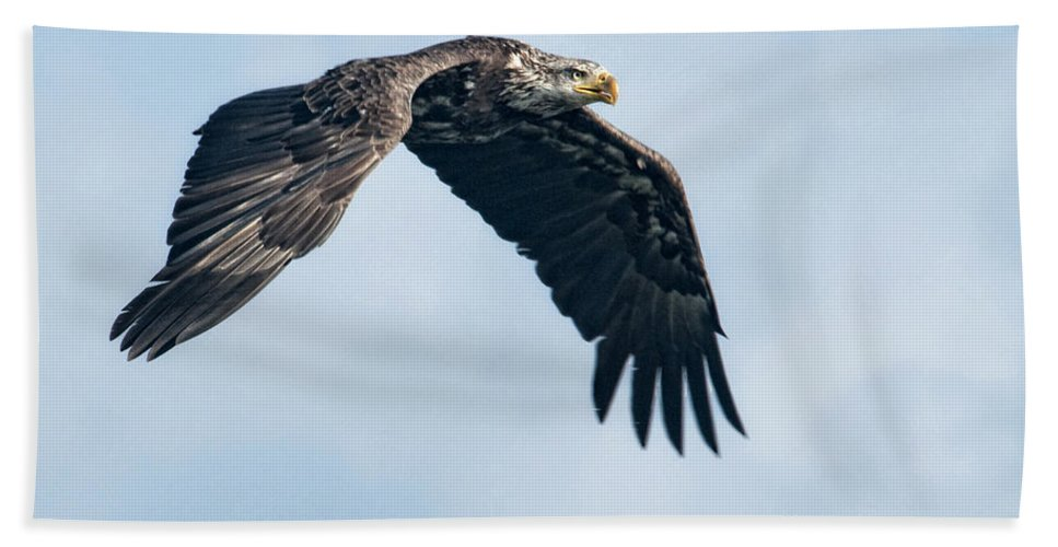 Eagles Hand Towel featuring the photograph Against The Sky by Claudia Kuhn