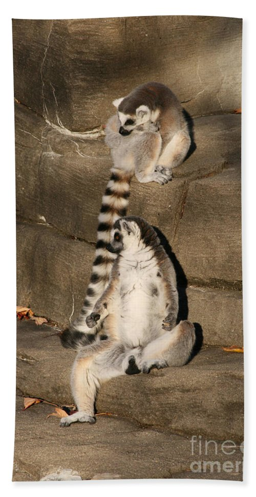 Ring-tailed Lemur Hand Towel featuring the photograph Against The Wall by Judy Whitton