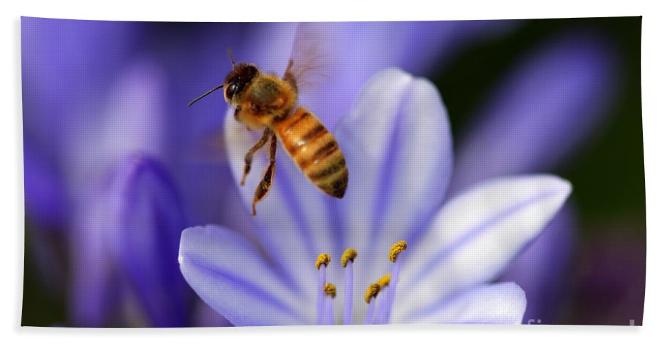 Bee Hand Towel featuring the photograph Agapanthus Africanus by Henrik Lehnerer