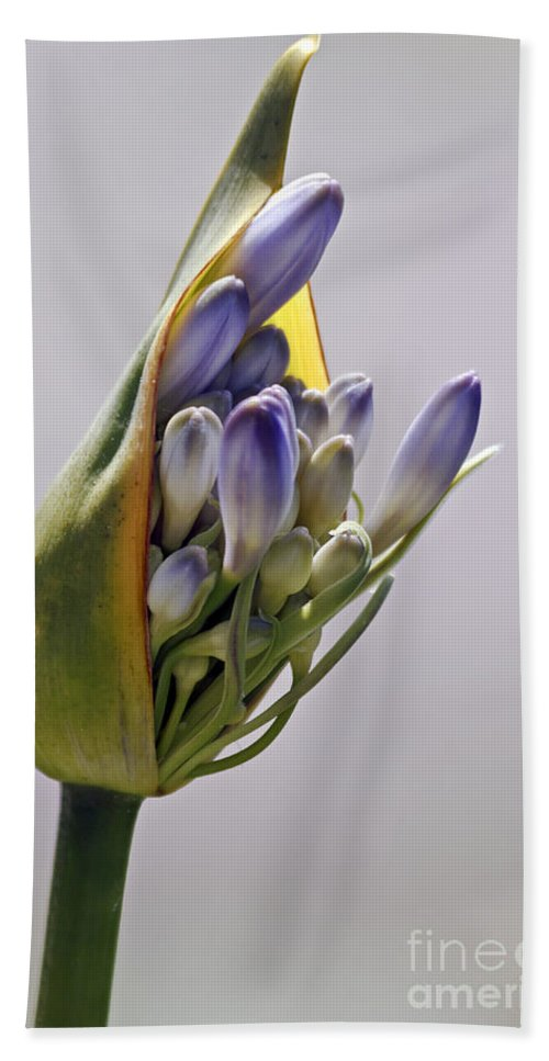 Kate Brown Hand Towel featuring the photograph Agapanthus Blue by Kate Brown