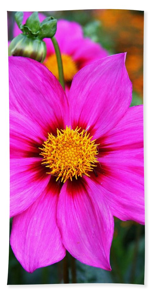Dahlia Hand Towel featuring the photograph Aglow by Christiane Schulze Art And Photography