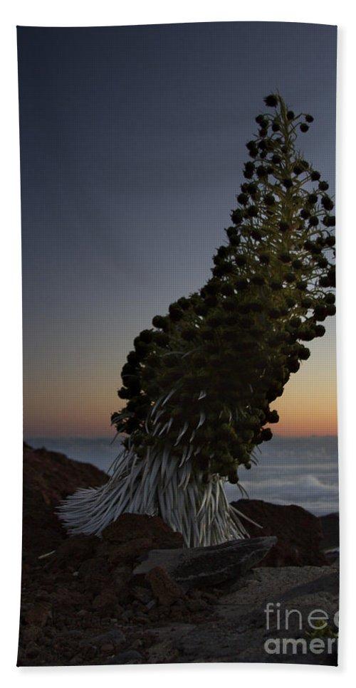Aloha Hand Towel featuring the photograph Ahinahina - Silversword - Argyroxiphium Sandwicense - Summit Haleakala Maui Hawaii by Sharon Mau