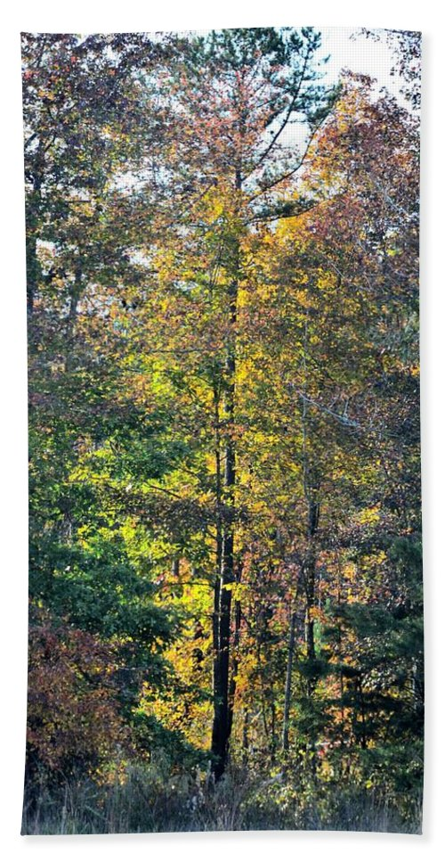 Alabama Forest In Autumn 2012 Hand Towel featuring the photograph Alabama Forest In Autumn 2012 by Maria Urso