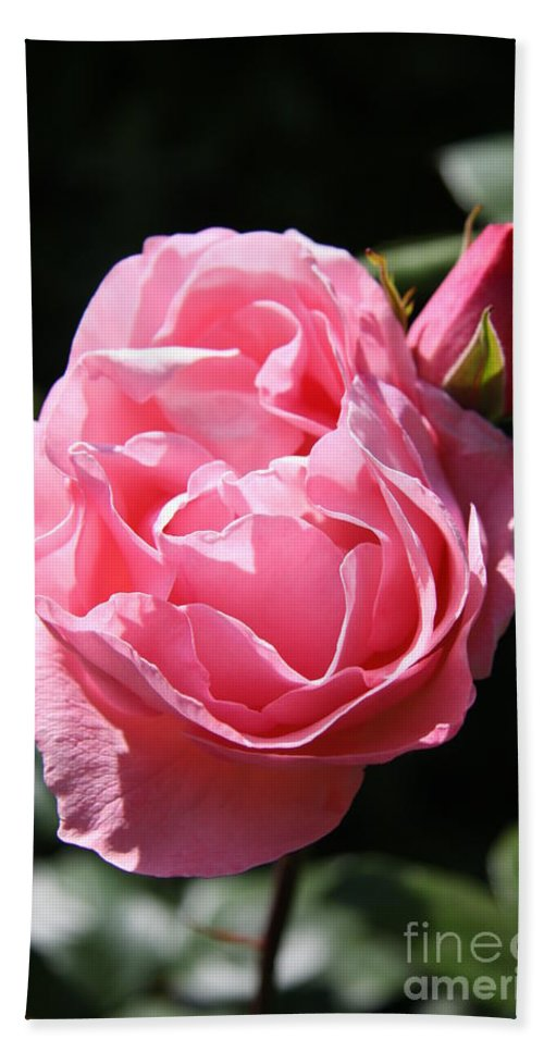 Rose Hand Towel featuring the photograph All Shades Of Pink by Christiane Schulze Art And Photography