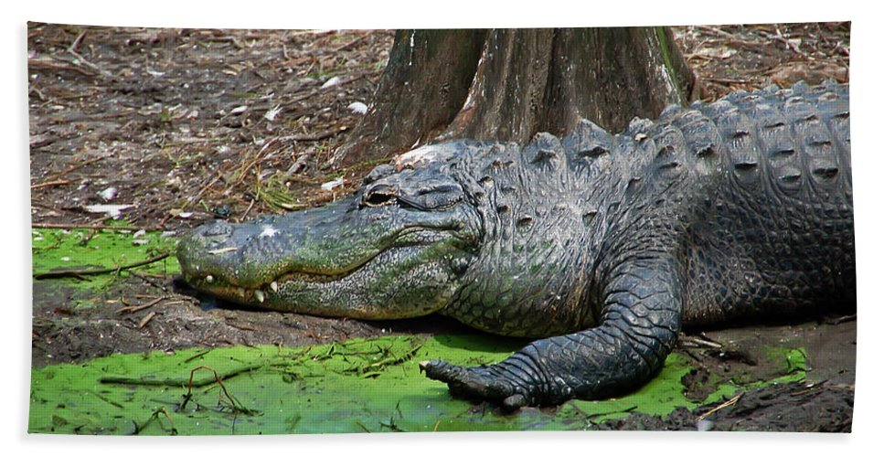 Alligator Hand Towel featuring the photograph Alligator by Aimee L Maher ALM GALLERY