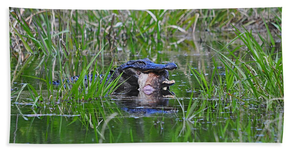 Alligator Bath Sheet featuring the photograph Alligator Appetite by Al Powell Photography USA