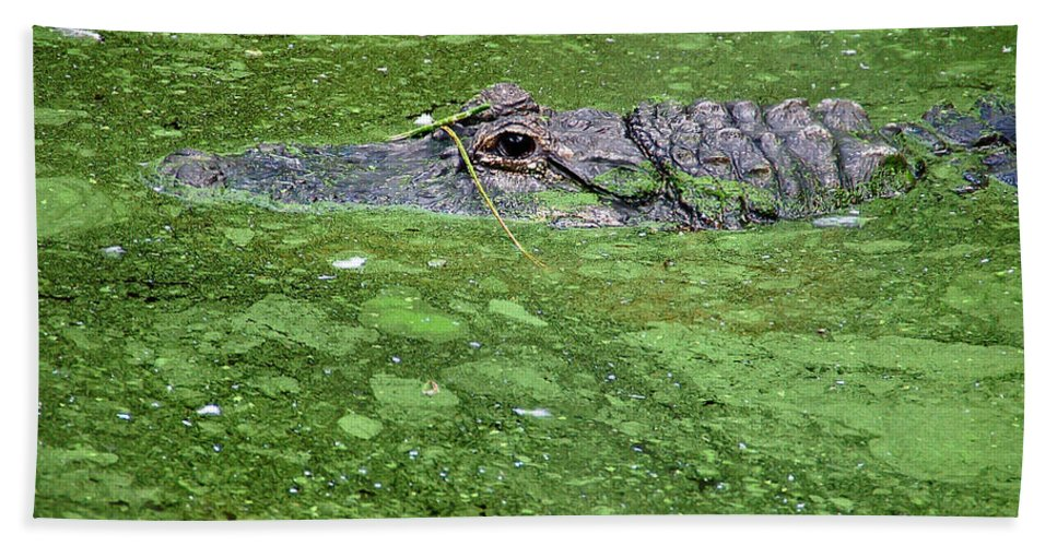 Alligator Hand Towel featuring the photograph Alligator In Swamp by Aimee L Maher ALM GALLERY
