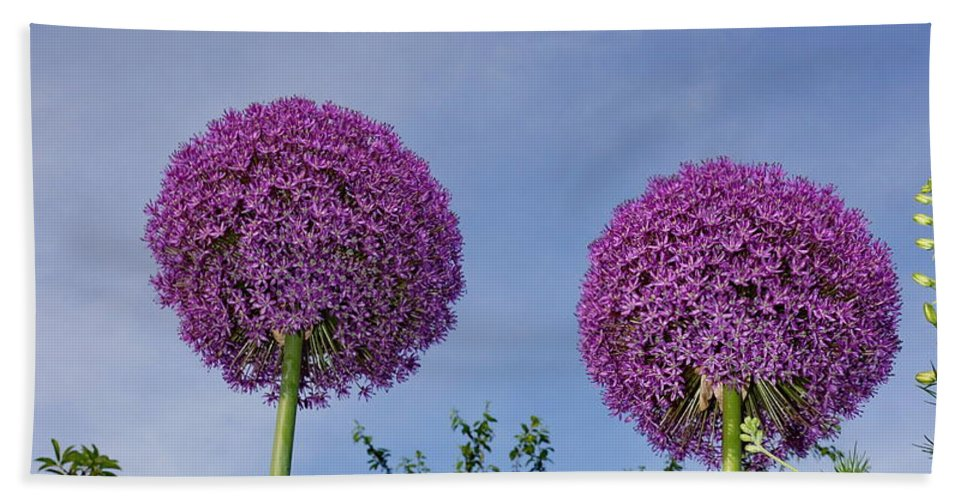 Purple Bath Sheet featuring the photograph Allium Flowers by Alan Hutchins