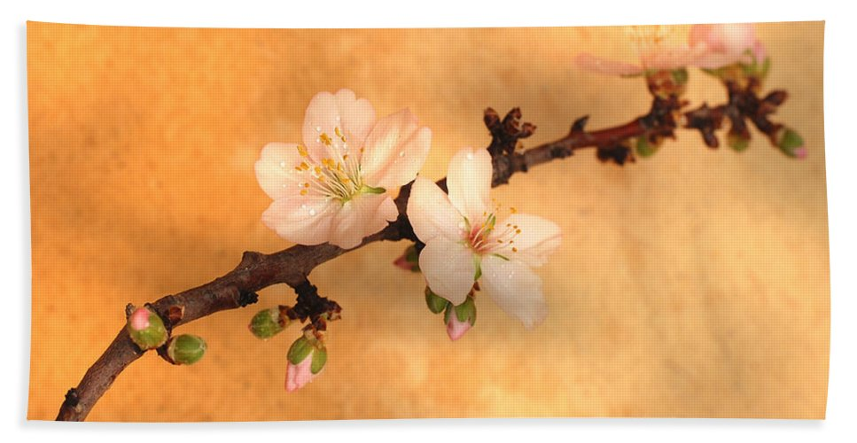 Almond Flowers Hand Towel featuring the photograph Almond Flowers by Gina Dsgn