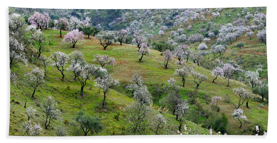 Flowers Hand Towel featuring the photograph Almonds by Guido Montanes Castillo