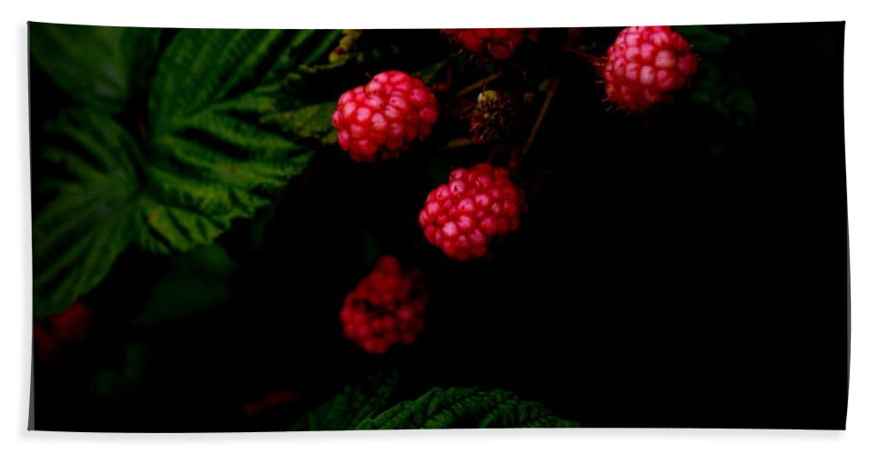 Blackberries Hand Towel featuring the photograph Almost Ripe by Kathy Barney
