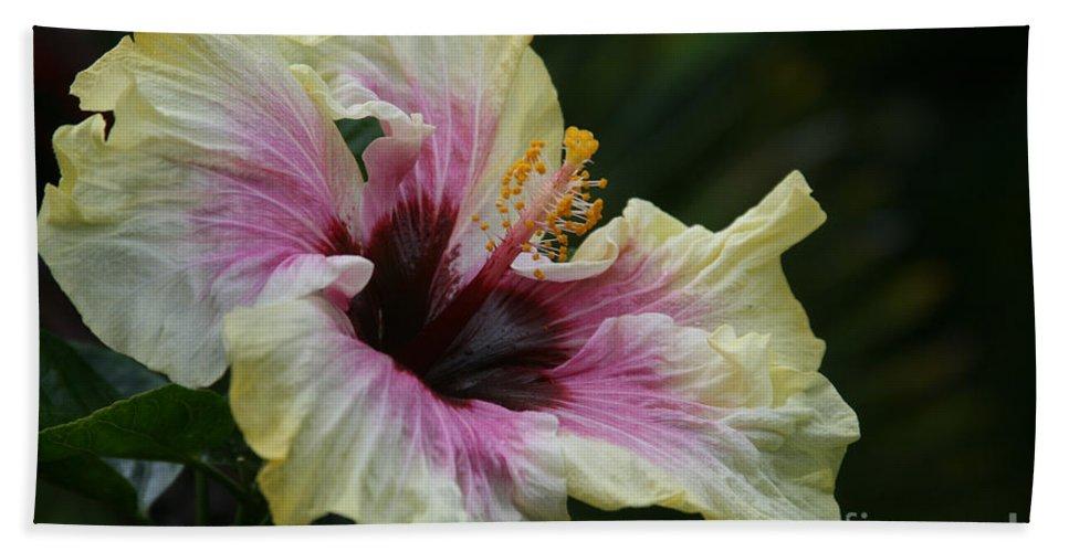 Aloha Bath Sheet featuring the photograph Aloha Aloalo Tropical Hibiscus Haiku Maui Hawaii by Sharon Mau