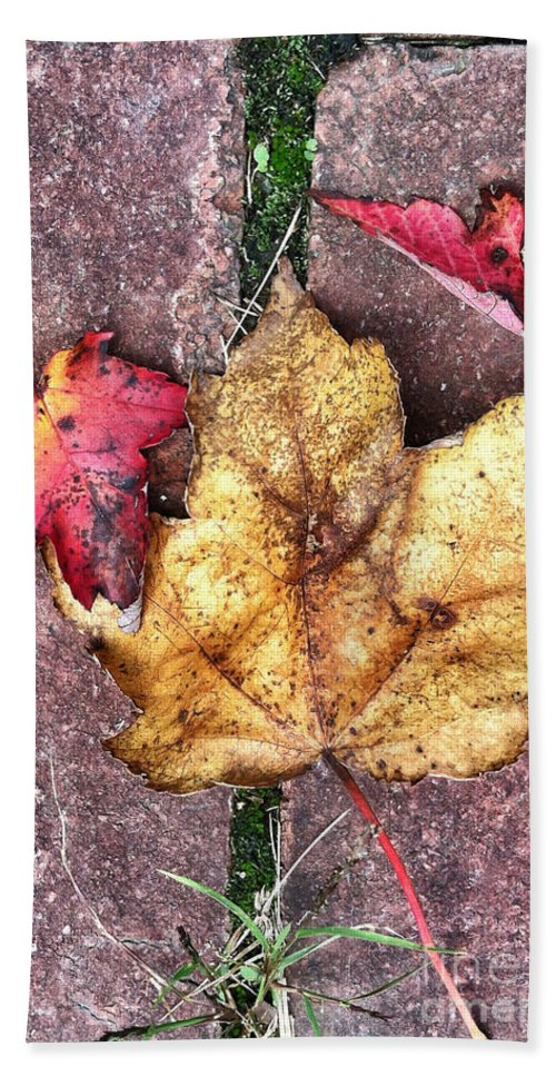 Leaves Bath Sheet featuring the photograph Along The Path by Kerri Farley