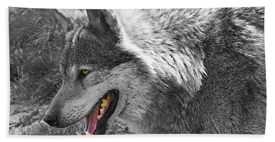 Grey Wolf Hand Towel featuring the photograph Alpha Male Wolf - You Look Tasty 2 by Gill Billington