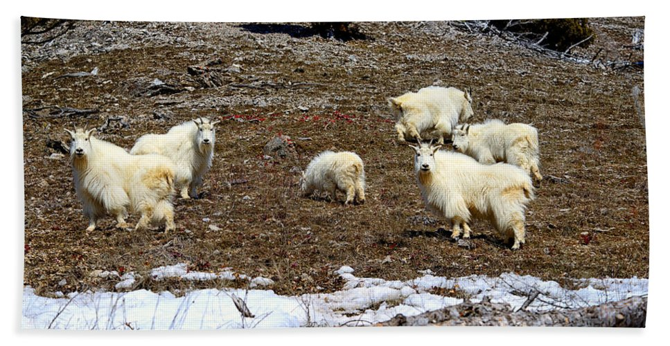 Mountain Goat Hand Towel featuring the photograph Alpine Mountain Goats by Greg Norrell