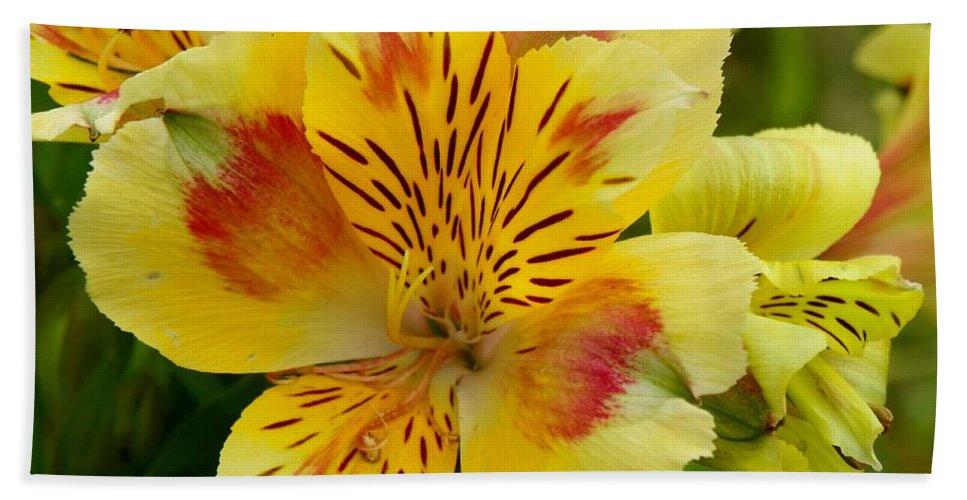 Garden Bath Sheet featuring the photograph Alstroemerias Flower 1 by Lynne Miller