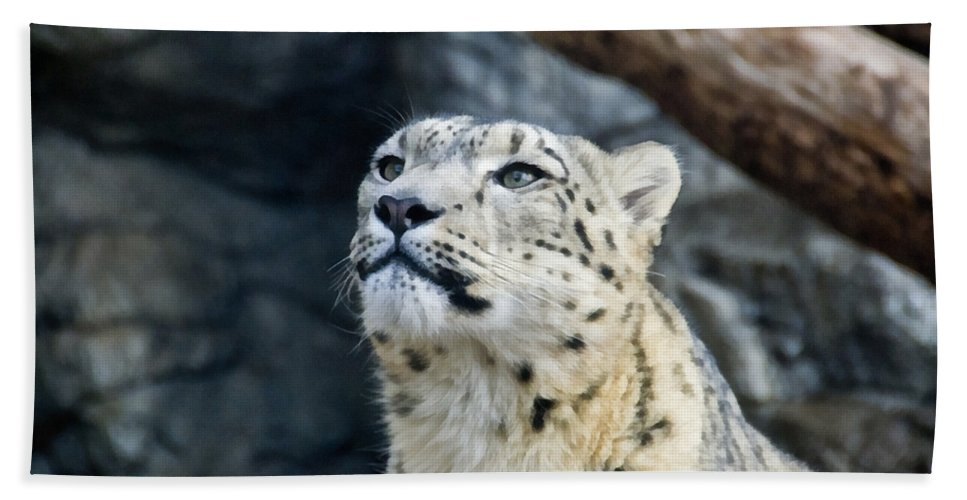 Eyes Bath Sheet featuring the photograph Always Alert by Angelina Vick