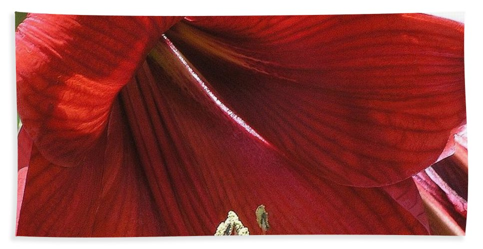 Amaryllis Hand Towel featuring the photograph Amaryllis by Mary Deal