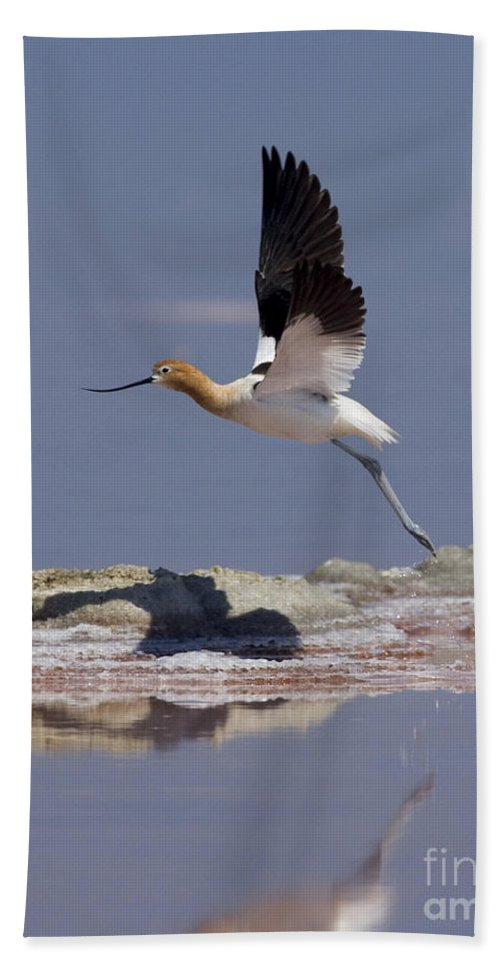 American Avocet Hand Towel featuring the photograph American Avocet by Anthony Mercieca