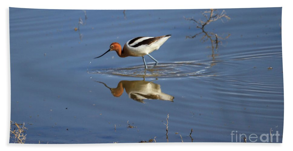 Wildlife Bath Sheet featuring the photograph American Avocet by Robert Bales