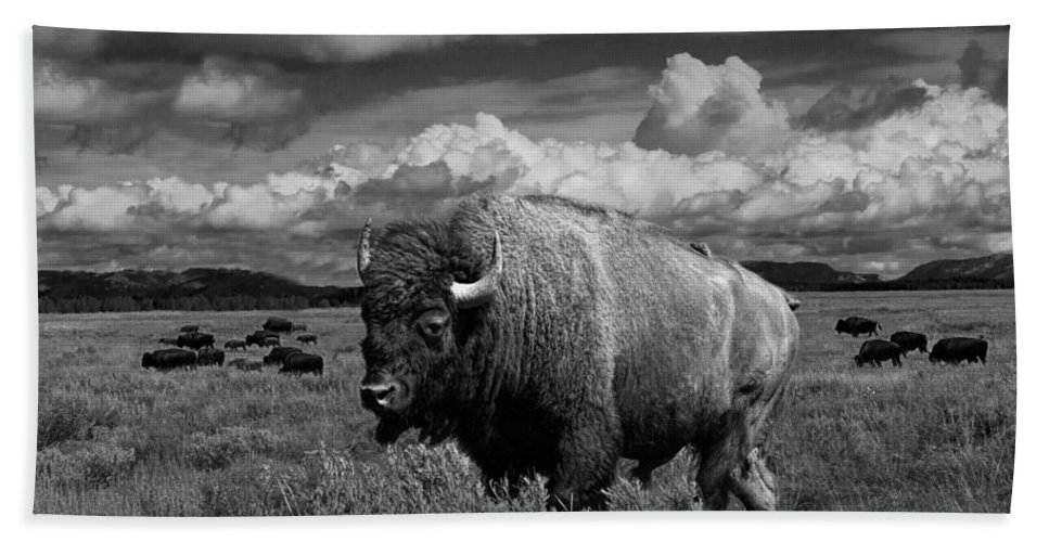 Bison Bath Sheet featuring the photograph American Buffalo Or Bison In The Grand Teton National Park by Randall Nyhof