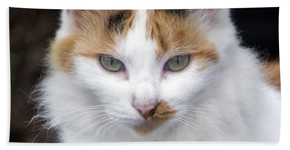 Horizontal Bath Sheet featuring the photograph American Calico Cat Portrait by Sally Rockefeller