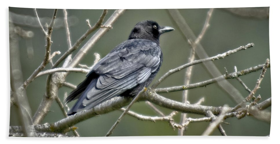 Wildlife Hand Towel featuring the photograph American Crow by Jim Thompson