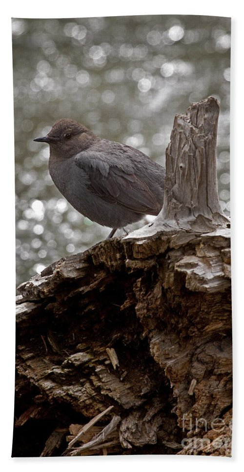 Cinclus Mexicanus Hand Towel featuring the photograph American Dipper  #7944 by J L Woody Wooden