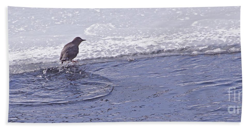 Bird Hand Towel featuring the photograph American Dipper  #8163 by J L Woody Wooden