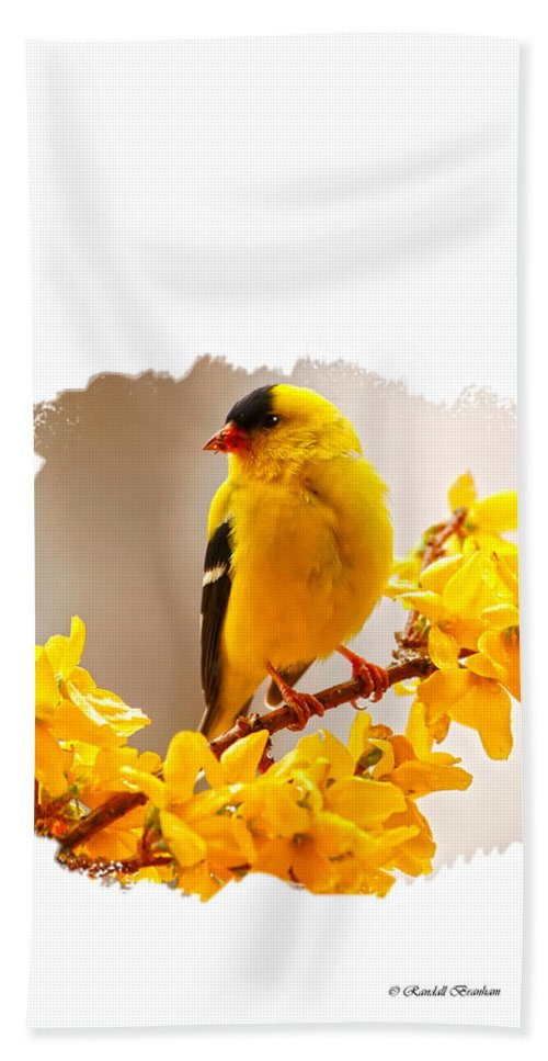 American Male Goldfinch Hand Towel featuring the photograph American Goldfinch Branch Of Forsythia by Randall Branham