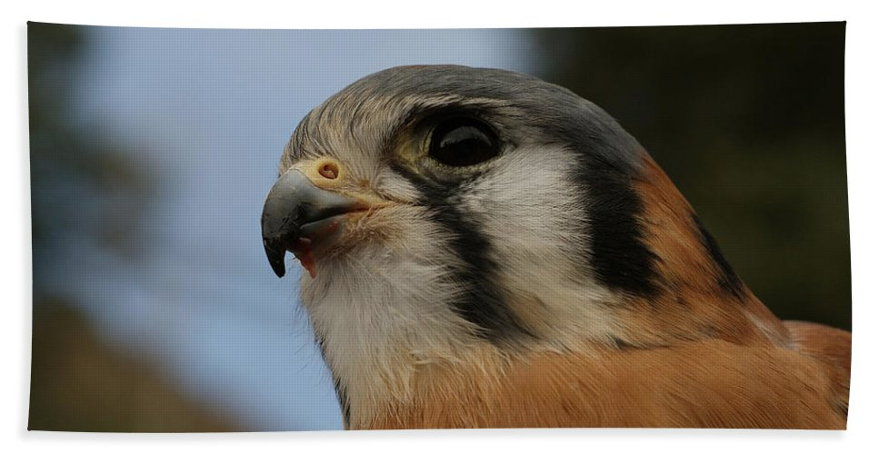 American Kestrel Bath Sheet featuring the photograph American Kestrel 2 by Ernie Echols