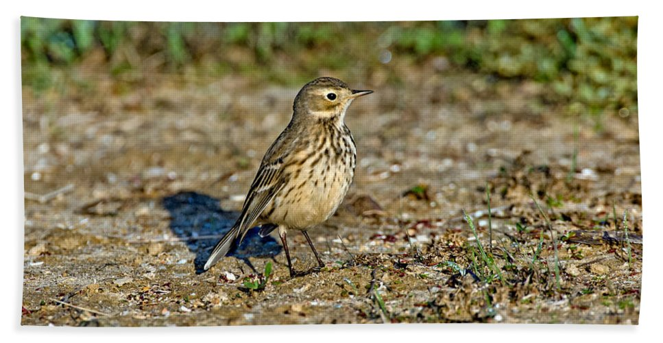Animal Hand Towel featuring the photograph American Pipit by Anthony Mercieca
