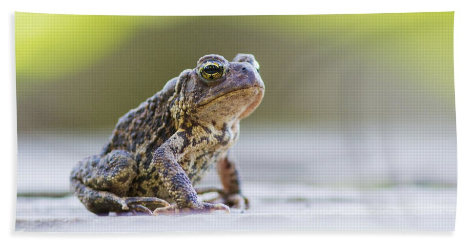 Frog Bath Sheet featuring the photograph American Toad by Mircea Costina Photography