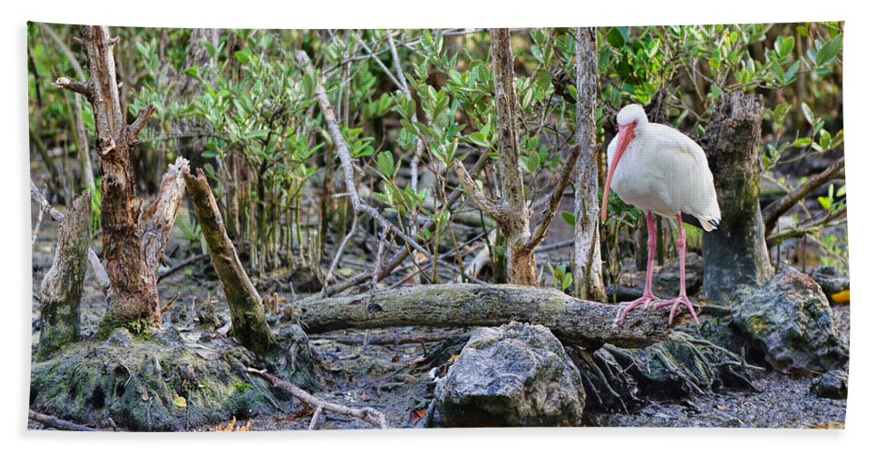 American White Ibis Bath Sheet featuring the photograph American White Ibis by Olga Hamilton