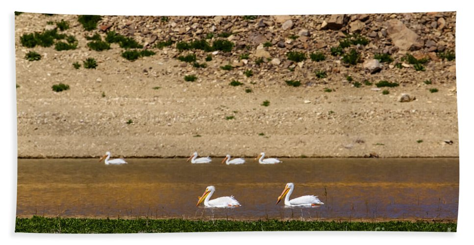 Birds Bath Sheet featuring the photograph American White Pelicans by Robert Bales